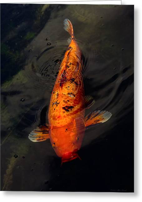 Kingyo Greeting Cards - Fish - Big fish little pond  Greeting Card by Mike Savad