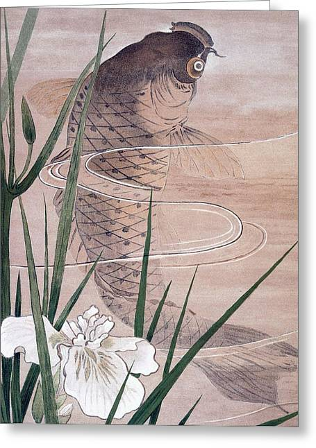 Marine Animal Greeting Cards - Fish Greeting Card by C. F. Kell