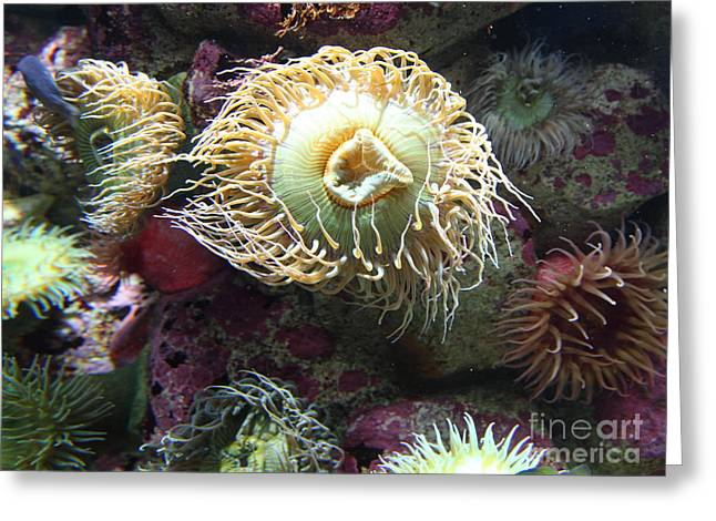 Aquarium Fish Greeting Cards - Fish Eating Anemone 5D24899 Greeting Card by Wingsdomain Art and Photography