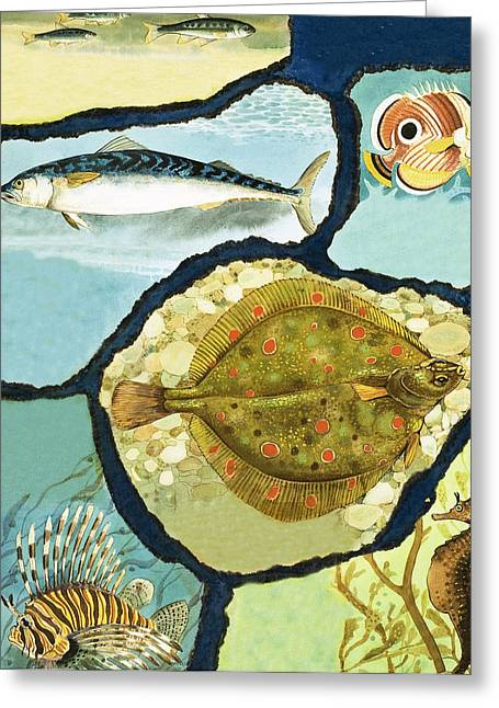 Border Drawings Greeting Cards - Fish Greeting Card by English School