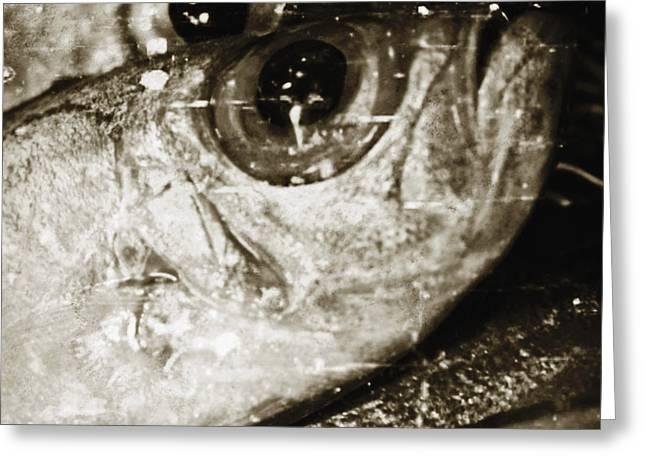 Scale Digital Art Greeting Cards - Fish Eyes 2 Greeting Card by Skip Nall