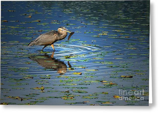 Great Birds Greeting Cards - Fish for Dinner Greeting Card by Sharon  Talson