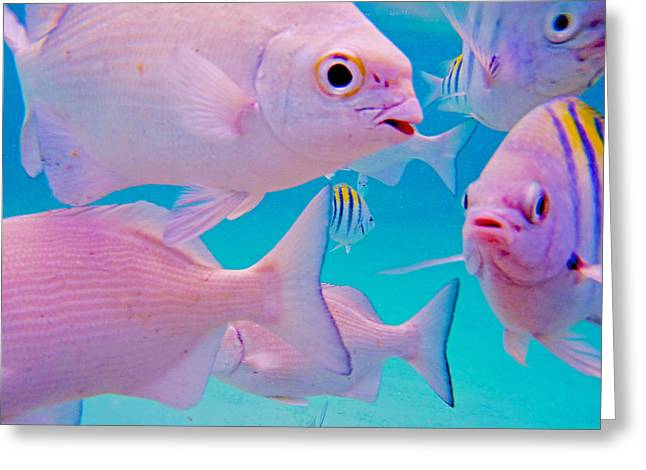 Reef Fish Photographs Greeting Cards - Fish Frenzy Greeting Card by Carey Chen