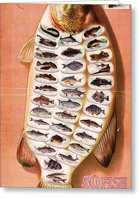 Decorative Fish Greeting Cards - Fish From American Waters Greeting Card by Pg Reproductions