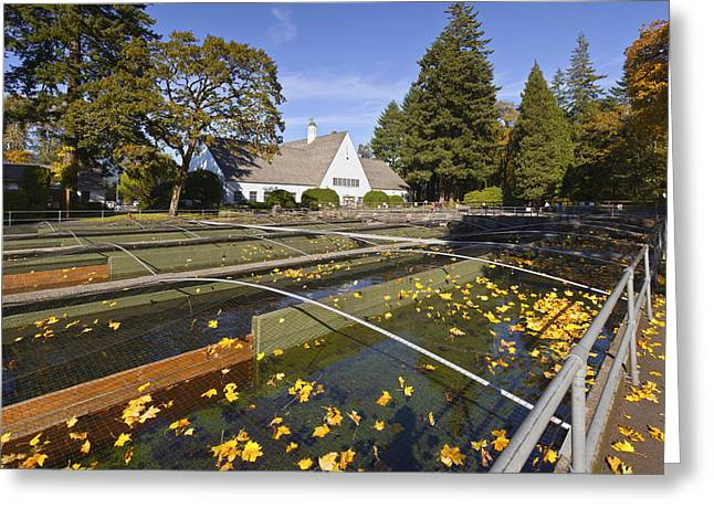 Seasons.net Greeting Cards - Fish hatchery Bonneville Dam Oregon. Greeting Card by Gino Rigucci