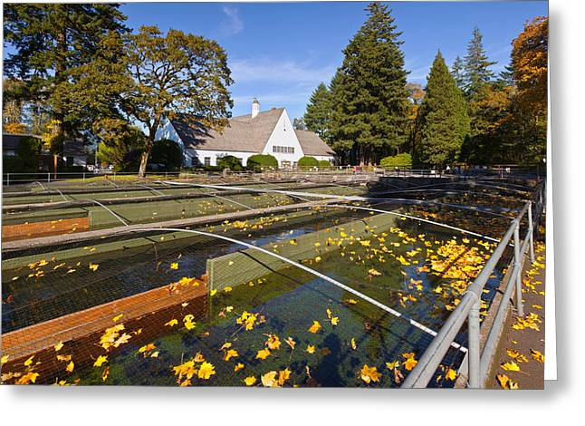 Fallen Leaf Greeting Cards - Fish Hatchery Nets And Holding Tanks Greeting Card by Panoramic Images