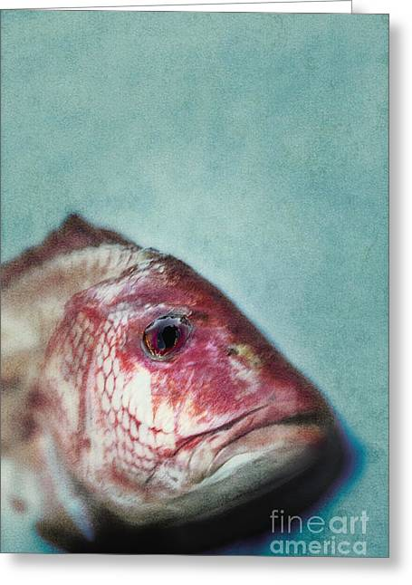 Red Snapper Greeting Cards - Fish Head Greeting Card by Margie Hurwich