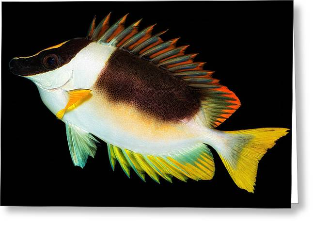 Aquarium Fish Pyrography Greeting Cards - Fish in the Aquarium Greeting Card by Yasar Ugurlu