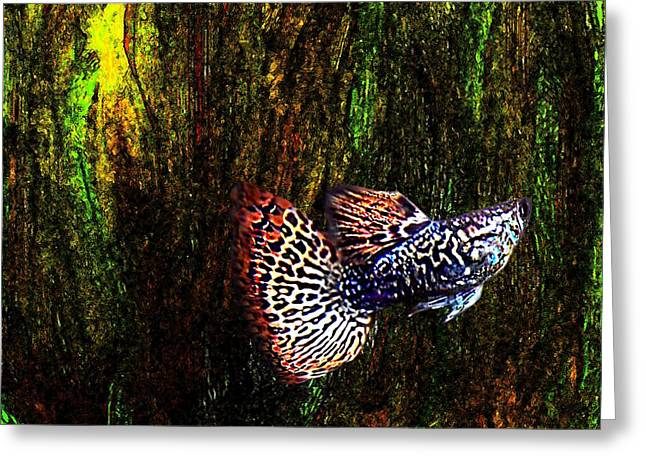 Textures Greeting Cards - Fish Kingdom Colors  Greeting Card by Mario  Perez