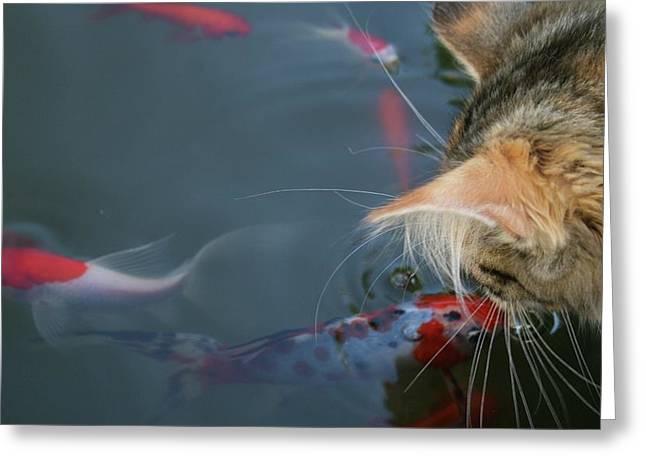 Real Life Greeting Cards - Fish Kiss Greeting Card by Joshua Sunday