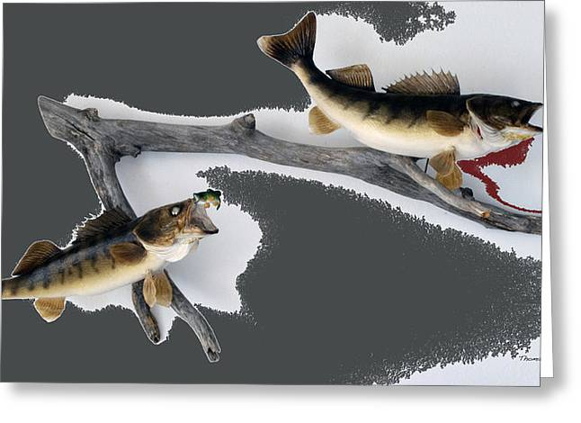 Photography By Tom Woolworth Greeting Cards - Fish Mount Set 06 B Greeting Card by Thomas Woolworth