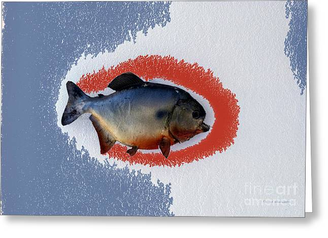 Fish Mount Set 12 B Greeting Card by Thomas Woolworth