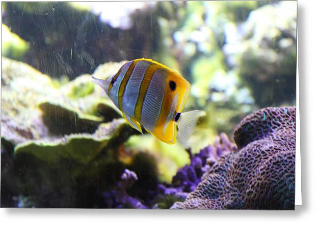 Aquatic Greeting Cards - Fish - National Aquarium in Baltimore MD - 1212111 Greeting Card by DC Photographer