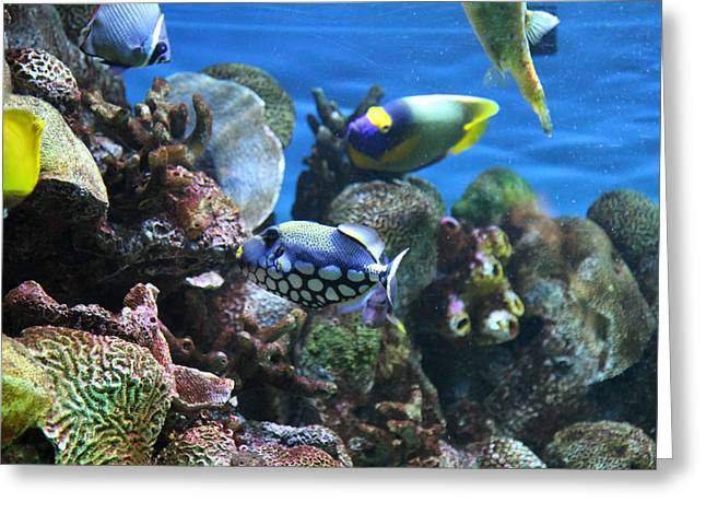 Inner Greeting Cards - Fish - National Aquarium in Baltimore MD - 1212113 Greeting Card by DC Photographer