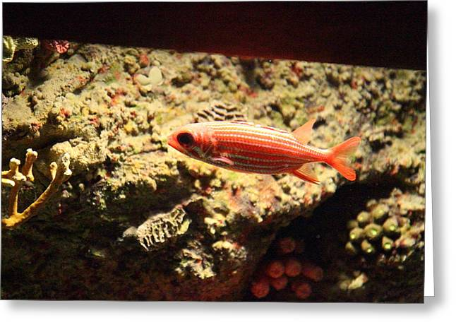 Fish - National Aquarium In Baltimore Md - 1212118 Greeting Card by DC Photographer