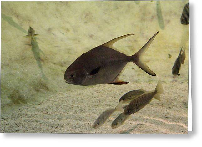 Fish - National Aquarium In Baltimore Md - 121212 Greeting Card by DC Photographer