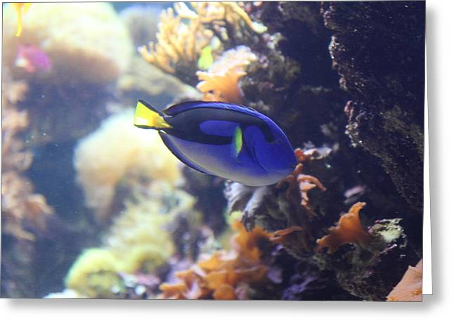 Fish - National Aquarium In Baltimore Md - 1212122 Greeting Card by DC Photographer