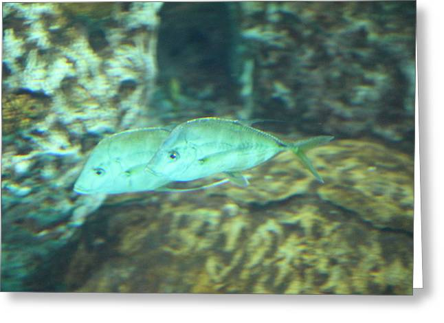 Fish - National Aquarium In Baltimore Md - 1212129 Greeting Card by DC Photographer