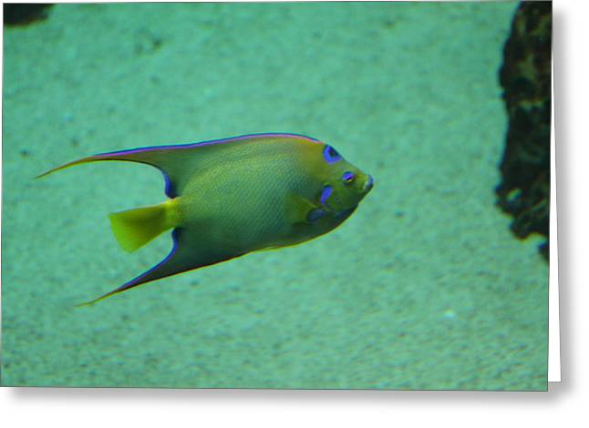 Sealife Greeting Cards - Fish - National Aquarium in Baltimore MD - 1212139 Greeting Card by DC Photographer