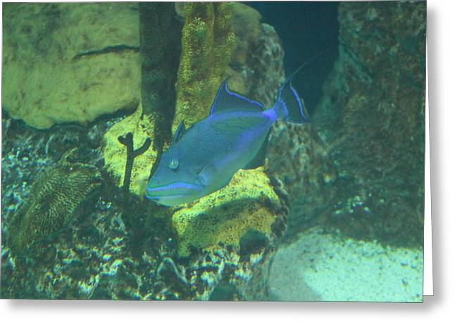 Fish National Aquarium In Baltimore Md 1212140 Photograph By Dc Photographer