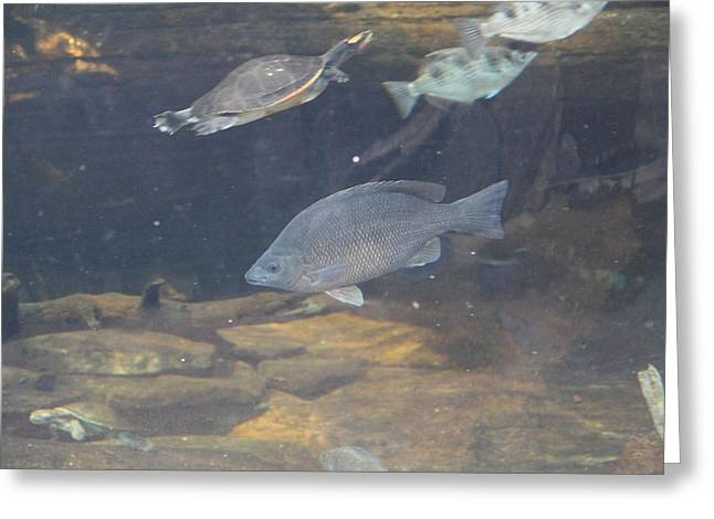 Landmark Greeting Cards - Fish - National Aquarium in Baltimore MD - 1212146 Greeting Card by DC Photographer