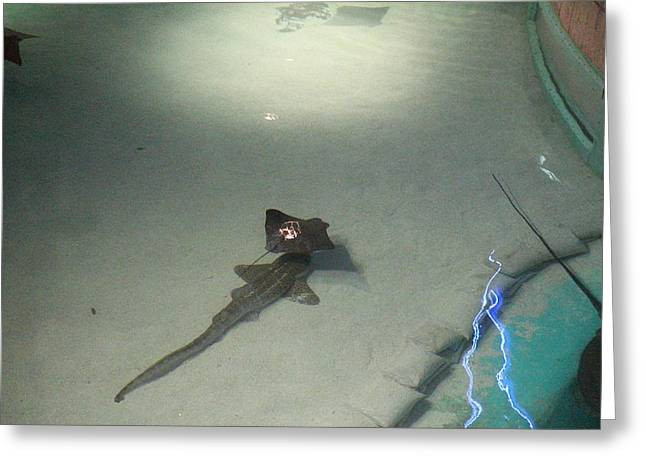 Fish - National Aquarium In Baltimore Md - 121215 Greeting Card by DC Photographer