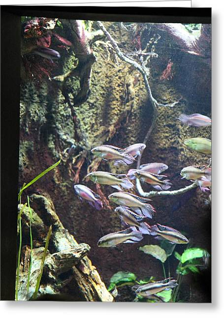 Aquatic Greeting Cards - Fish - National Aquarium in Baltimore MD - 121222 Greeting Card by DC Photographer