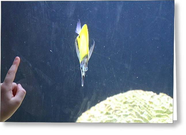 Aquatic Greeting Cards - Fish - National Aquarium in Baltimore MD - 121225 Greeting Card by DC Photographer