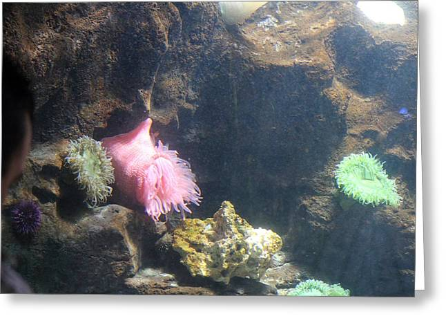 Sealife Greeting Cards - Fish - National Aquarium in Baltimore MD - 121228 Greeting Card by DC Photographer