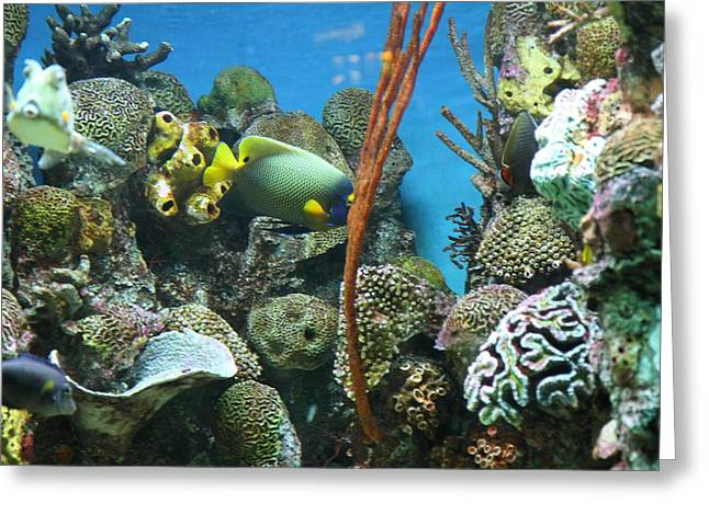 Fish - National Aquarium in Baltimore MD - 121232 Greeting Card by DC Photographer