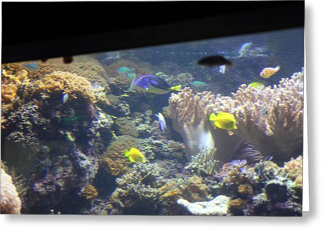Fishes Greeting Cards - Fish - National Aquarium in Baltimore MD - 121244 Greeting Card by DC Photographer