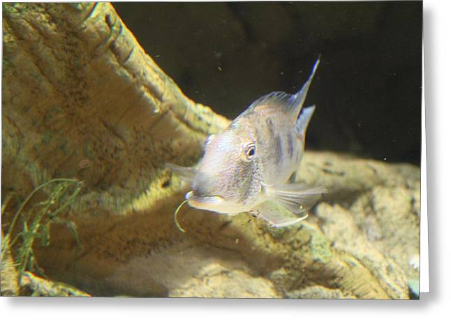 Fish - National Aquarium in Baltimore MD - 121248 Greeting Card by DC Photographer