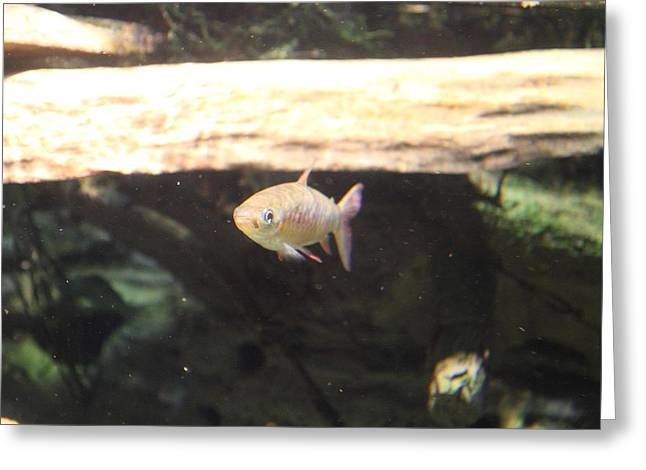 Fish - National Aquarium in Baltimore MD - 121249 Greeting Card by DC Photographer