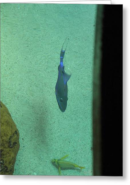 Aquatic Greeting Cards - Fish - National Aquarium in Baltimore MD - 121252 Greeting Card by DC Photographer