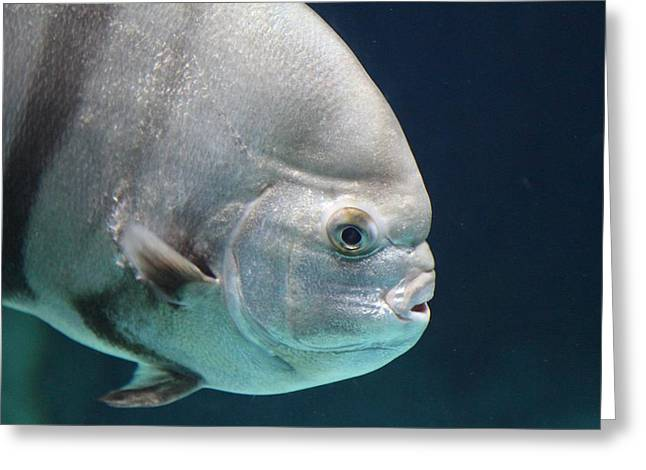 Fish - National Aquarium In Baltimore Md - 121254 Greeting Card by DC Photographer