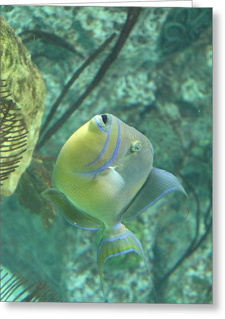 Aquatic Greeting Cards - Fish - National Aquarium in Baltimore MD - 121255 Greeting Card by DC Photographer