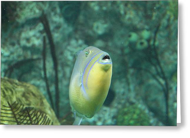 Dolphin Greeting Cards - Fish - National Aquarium in Baltimore MD - 121256 Greeting Card by DC Photographer