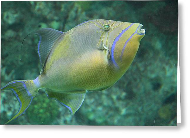 Md Greeting Cards - Fish - National Aquarium in Baltimore MD - 121258 Greeting Card by DC Photographer