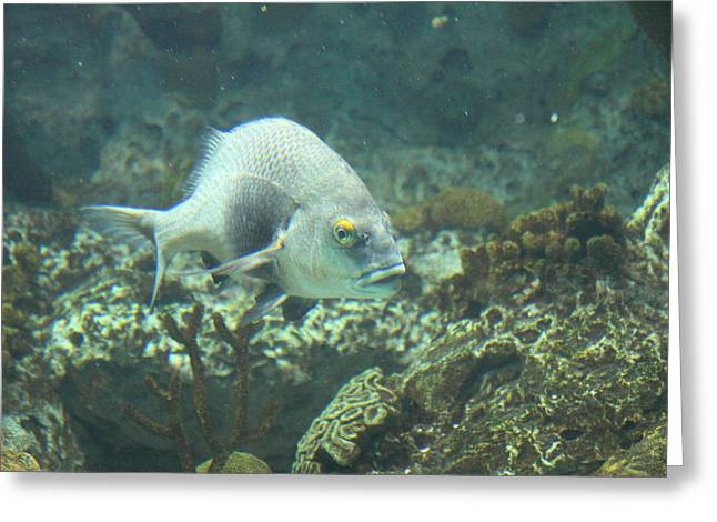 Aquatic Greeting Cards - Fish - National Aquarium in Baltimore MD - 121261 Greeting Card by DC Photographer