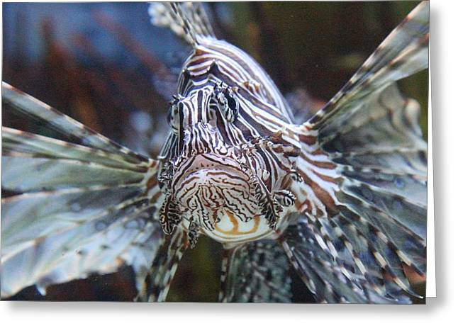 Fish - National Aquarium in Baltimore MD - 121263 Greeting Card by DC Photographer