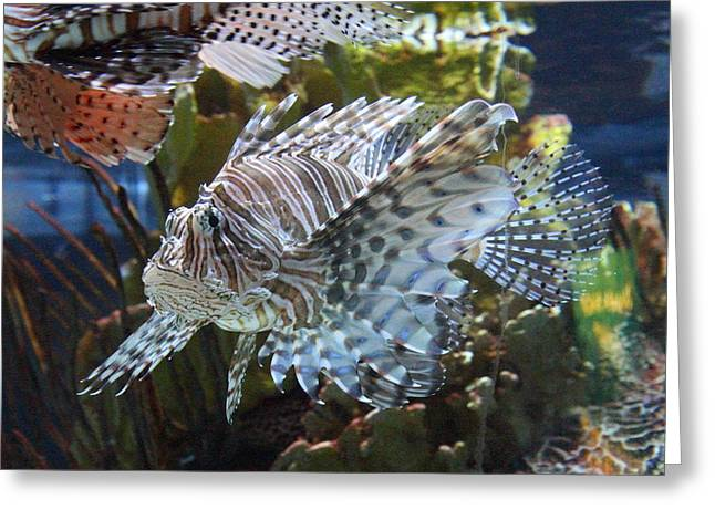 Attractions Greeting Cards - Fish - National Aquarium in Baltimore MD - 121265 Greeting Card by DC Photographer