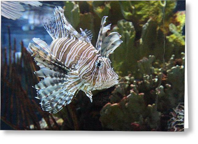 Aquatic Greeting Cards - Fish - National Aquarium in Baltimore MD - 121267 Greeting Card by DC Photographer