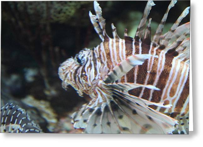 Attraction Greeting Cards - Fish - National Aquarium in Baltimore MD - 121277 Greeting Card by DC Photographer