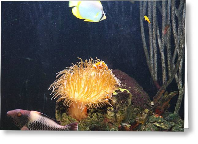 Attraction Greeting Cards - Fish - National Aquarium in Baltimore MD - 121297 Greeting Card by DC Photographer
