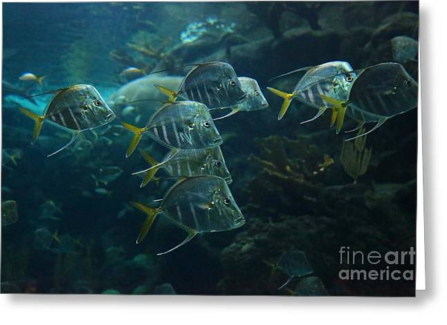 Beautiful Fish Greeting Cards - Fish on a Mission Greeting Card by Carol Groenen