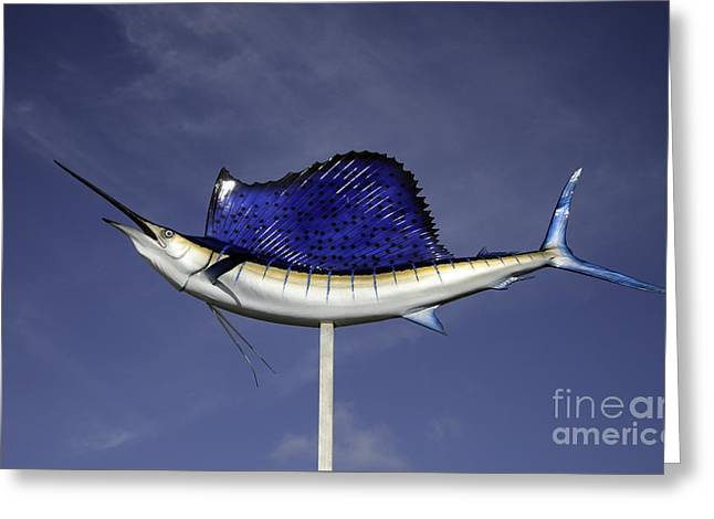Striped Marlin Greeting Cards - Fish on a Stick Greeting Card by Glenn Gordon