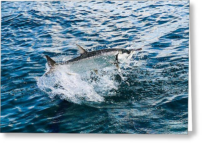 Fish Out Of Water Greeting Card by  Michael Glenn