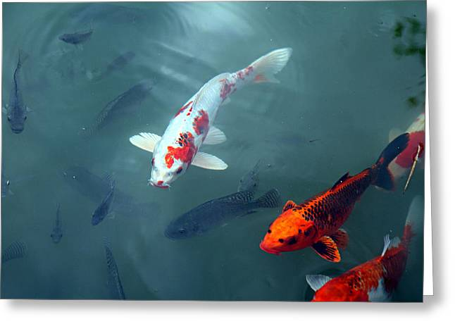 Fish - Panviman Chiang Mai Spa And Resort - Chiang Mai Thailand - 01131 Greeting Card by DC Photographer