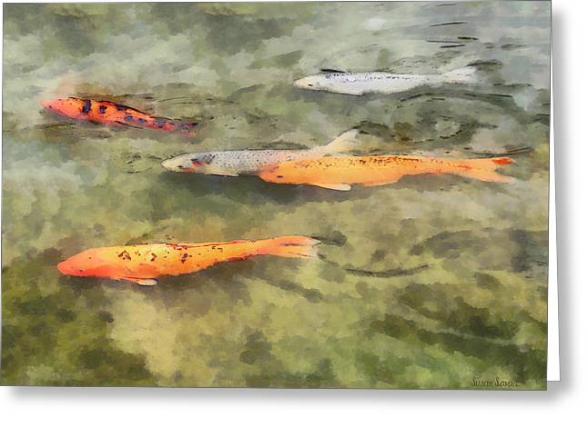 Pond Photographs Greeting Cards - Fish - School of Koi Greeting Card by Susan Savad