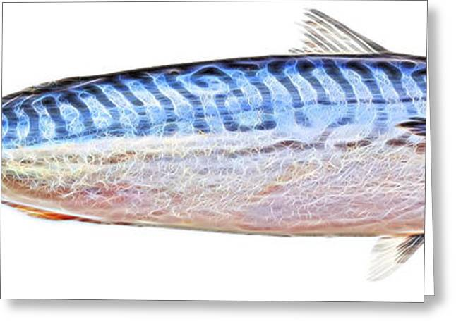Fish Digital Greeting Cards - Fish to Glow Greeting Card by Elaine MacKenzie